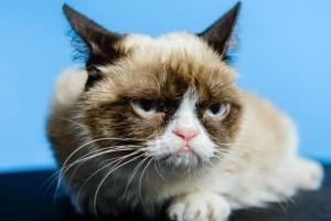 Internetin 10 ünlü kedisi