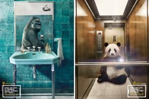 National Geographic'ten vahşi yaşam selfie'leri kampanyası