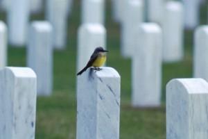 Öldükten sonra sosyal medya hesaplarına ne oluyor
