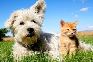 Yapılan bir çalışmaya göre; kedi severler köpek sahiplerinden daha akıllı