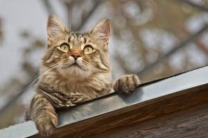 Kedi fotoğrafları paylaşımlarınızla gizlilik problemlerini nasıl ortaya çıkarabilir