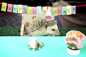 Minik hayvanlar için minik festivaller viral oldu