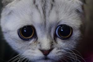 Yeni nesil Huysuz Kedi ile tanıştınız mı