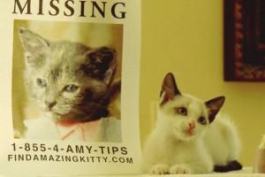'Kayıp Kız' filminin tanıtımı bu kez kedilerle yapıldı