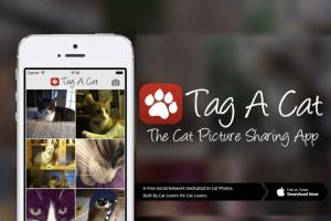tag a cat_