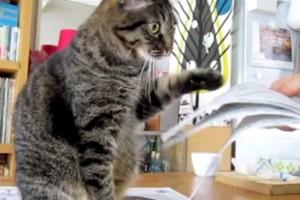 Kedilerin kâğıtla sınavı