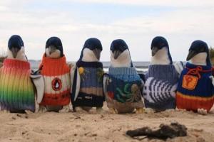 Avustralya'da 109 yaşında penguenler için süveter örüyor