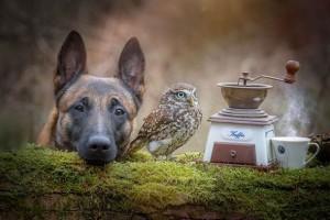 Köpek ile baykuşun alışılmadık dostluğu içinizi ısıtacak