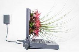Apple bilgisayarlar bitkilerle hayat buluyor: Plant Your Mac