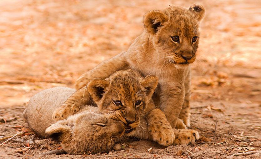 Young Lions Türkiye başvuruları başladı