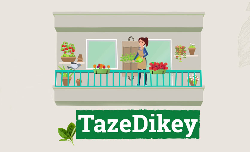 Tazedirekt'ten dikey tarım projesi: Tazedikey
